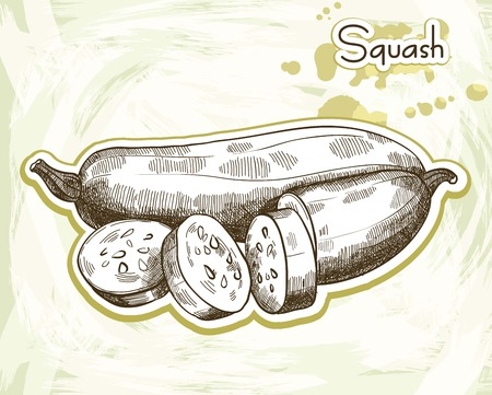 zucchini: whole and sliced zucchini. sketch made by hand