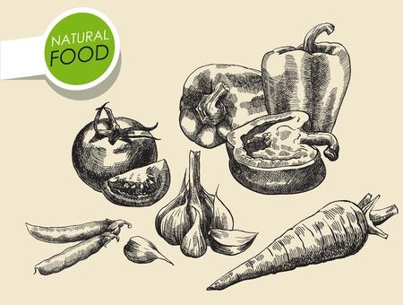 food still: Still life of vegetables. sketch made by hand