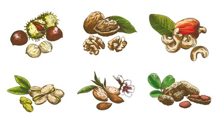 harvesting: Various kinds of nuts set of sketches made by hand