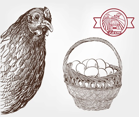 breeding: poultry breeding. set of sketches made by hand