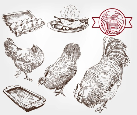 aviculture: poultry breeding. set of sketches made by hand