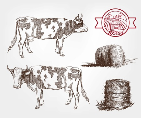 rick: breeding cows. set of sketches made by hand Illustration