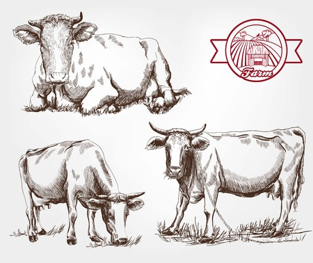 breeding cows. set of sketches made by hand 矢量图像