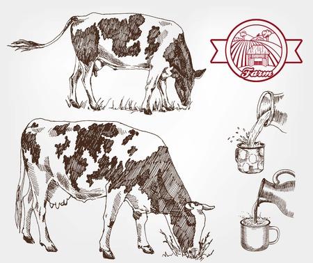 produits alimentaires: vaches reproductrices. un ensemble de croquis faits à la main Illustration