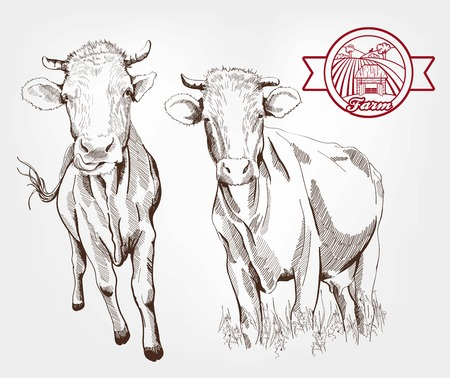 breeding: breeding cows. set of sketches made by hand Illustration