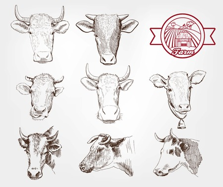 cow head: breeding cows. set of sketches made by hand Illustration