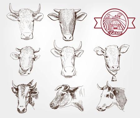 cuernos: vacas de cría. conjunto de bocetos hechos a mano Vectores