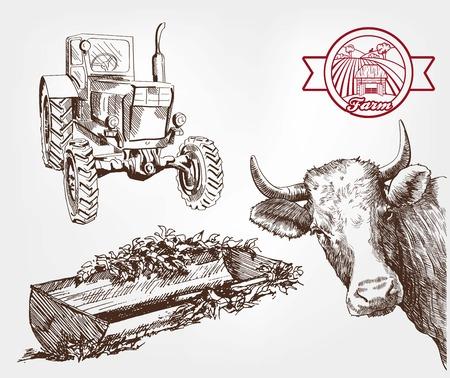 Vaches reproductrices. un ensemble de croquis faits à la main Banque d'images - 44436930