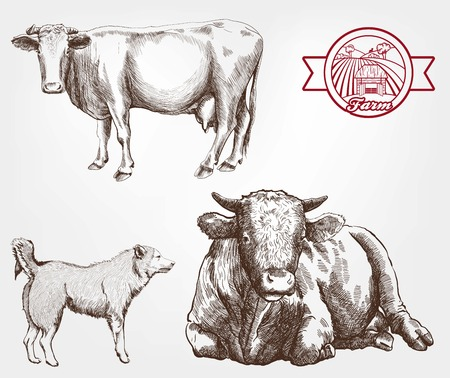 cattle guard: breeding cows. set of sketches made by hand Illustration