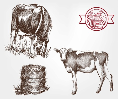 grazing: breeding cows. set of sketches made by hand Illustration
