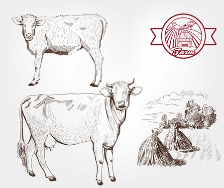 compilation: breeding cows. set of sketches made by hand Illustration