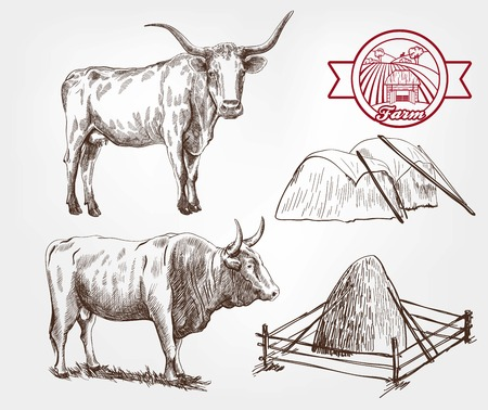 bull horn: breeding cows. set of sketches made by hand Illustration