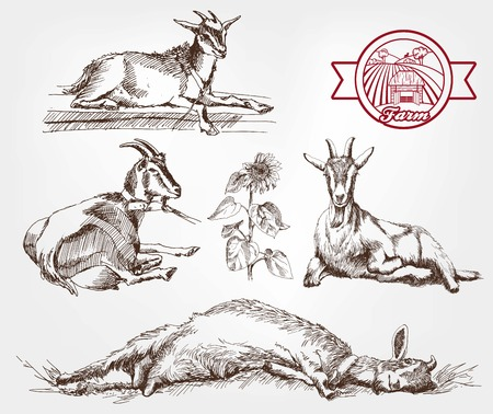 yeanling: goat breeding. set of sketches made by hand