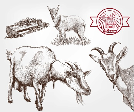 husbandry: goat breeding. set of sketches made by hand