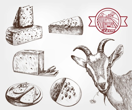 goat cheese: goat breeding. set of sketches made by hand
