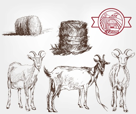 pet breeding: goat breeding. set of sketches made by hand