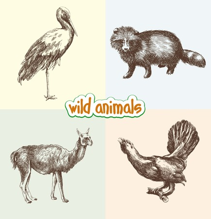 animals in the wild: wild animals. set of sketches made by hand