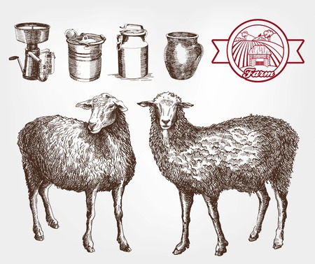breeding: sheep breeding. set of sketches made by hand