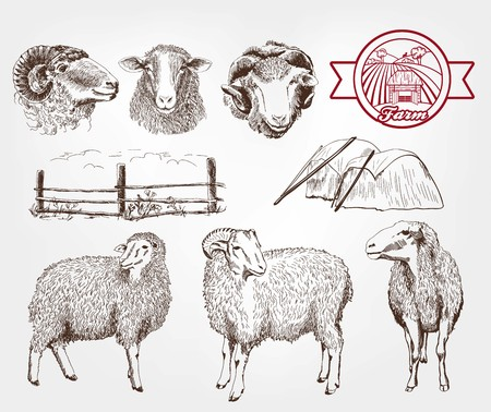 and sheep: cría de ovejas. conjunto de bocetos hechos a mano Vectores