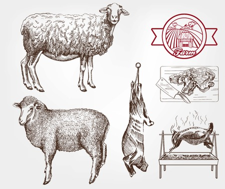 pet breeding: sheep breeding. set of sketches made by hand