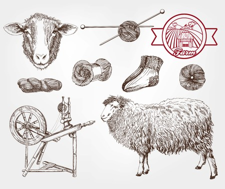 mutton: sheep breeding. set of sketches made by hand