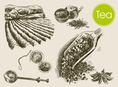 tea plantation: tea ceremony. beautiful background made by hand