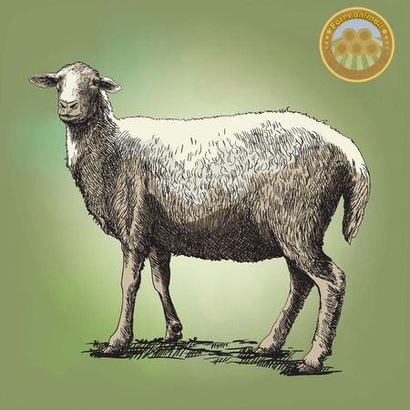 husbandry: sheep breeding. sketch made by hand on a colored background