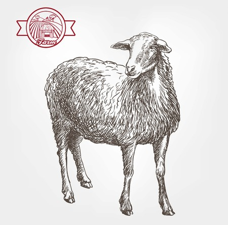 yeanling: sheep breeding. sketch made by hand on a grey background