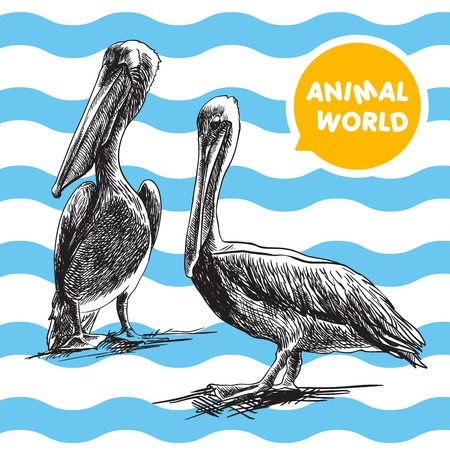whiteblue: two pelican. sketch made by hand on white-blue background Illustration