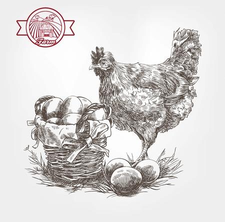 aves de corral: cr�a de aves de corral. conjunto de bocetos hechos a mano