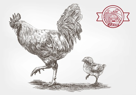 profil: rooster and chicken. sketches made by hand on a gray background