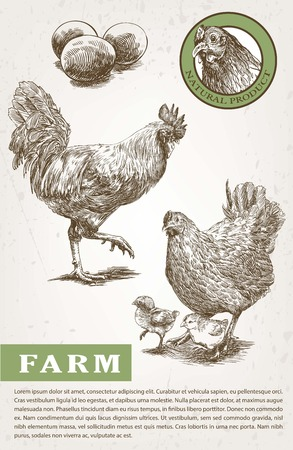 aviculture: brood-hen and rooster. sketches made by hand on a gray background Illustration