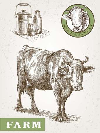 pet breeding: hand drawn sketch cow and milk products Illustration