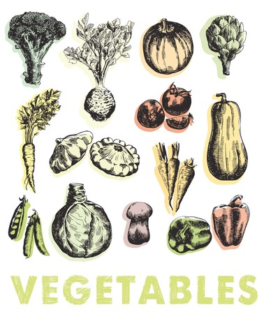 compilation: colored hand drawn sketches of vegetables on a white background Illustration