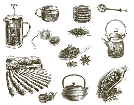 hand drawn sketches of natural tea on a white background