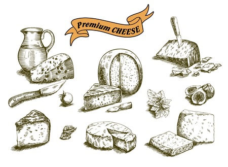 mozzarella cheese: hand drawn sketches of natural cheese on a white background