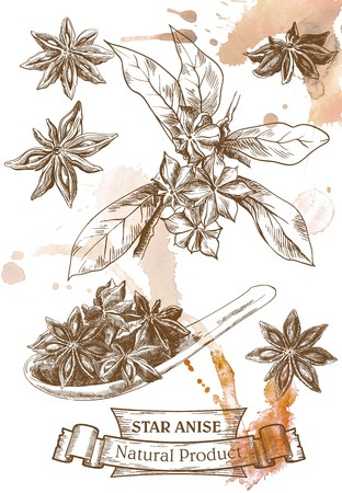 star anise: hand drawn sketches of star anise on a abstract background