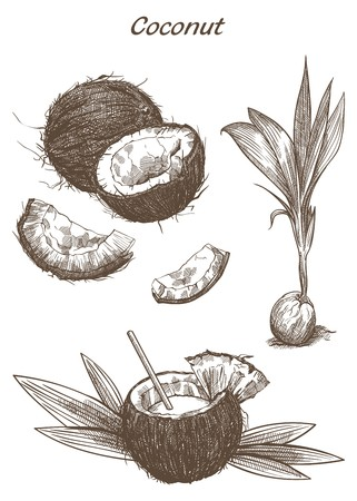 coconuts: cocktail of coconut milk and half a coconut