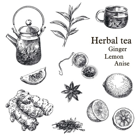non alcoholic: hand drawn sketches of natural tea, lemon, ginger and star anise on a white background