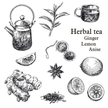 handgetekende schetsen van natuurlijke thee, citroen, gember en steranijs op een witte achtergrond