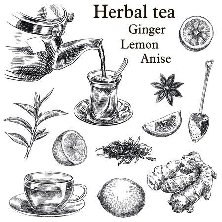 taza de té: bocetos dibujados a mano de té natural, limón, jengibre y anís estrellado sobre un fondo blanco