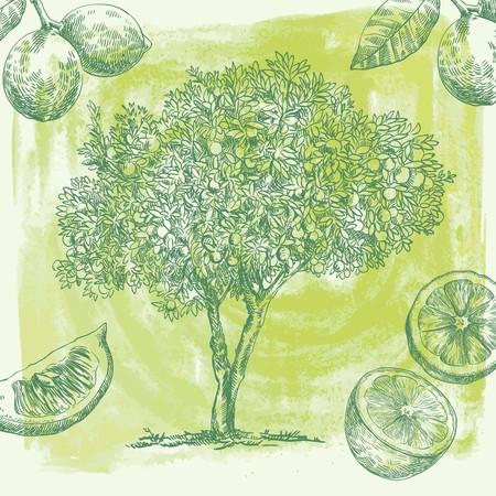 lemon tree: hand drawn sketch lemon tree of  on an abstract background light green