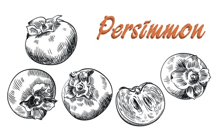 persimmon: hand drawn sketches of persimmon on a white background