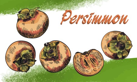 persimmon: hand drawn colored sketches of persimmon on an abstract background
