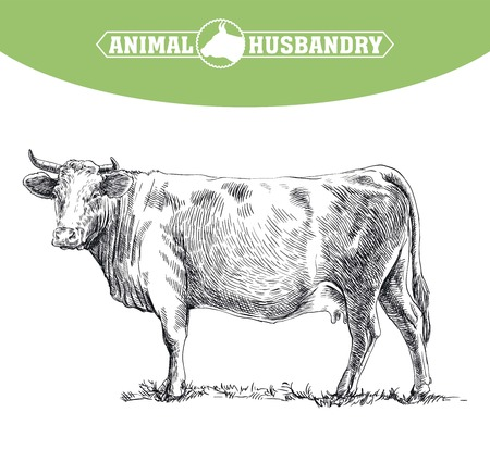 grazing: hand drawn sketches of cow on a white background