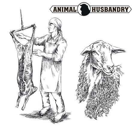 hand drawn sketch of a butcher who cut up the carcass of a sheepon a white background