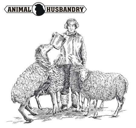 herd: farmer feeding sheep. sketch made by hand on a white background