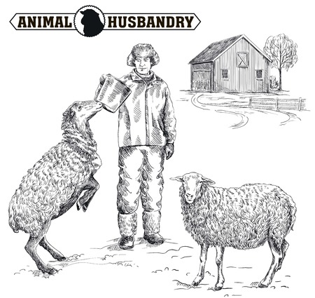pet breeding: farmer feeding sheep. sketch made by hand on a white background