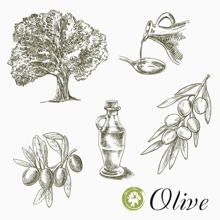 sketches of olive tree, olives and oil on a white background