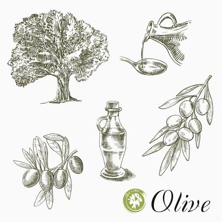 Schetsen van olijfboom, olijven en olie op een witte achtergrond